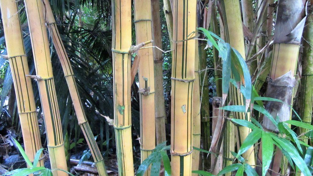Bambus als Parkett