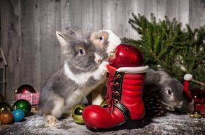 Weihnachten Adventszeit